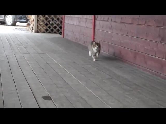 Imperil Cat ;)