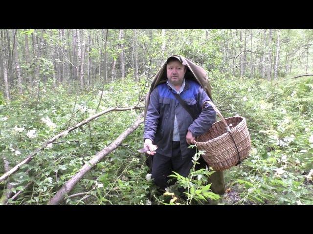 Первые серьёзные грибы в цветущем лесу Дневник грибника 23 июля 2017 года смотреть онлайн без регистрации