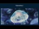 Jaytech James Grant Anjunadeep 02 CD2 Continuous Mix
