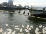 Лебедушка кружится