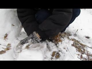 Кролик Блэк катает снег по траве