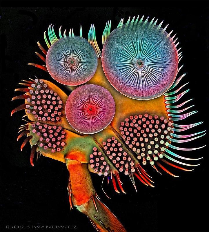 Волшебные макрофотографии Игоря Сивановича