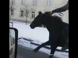 Однажды в Грозном)