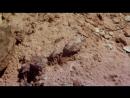 Планета динозавров 2011 - 7 серия