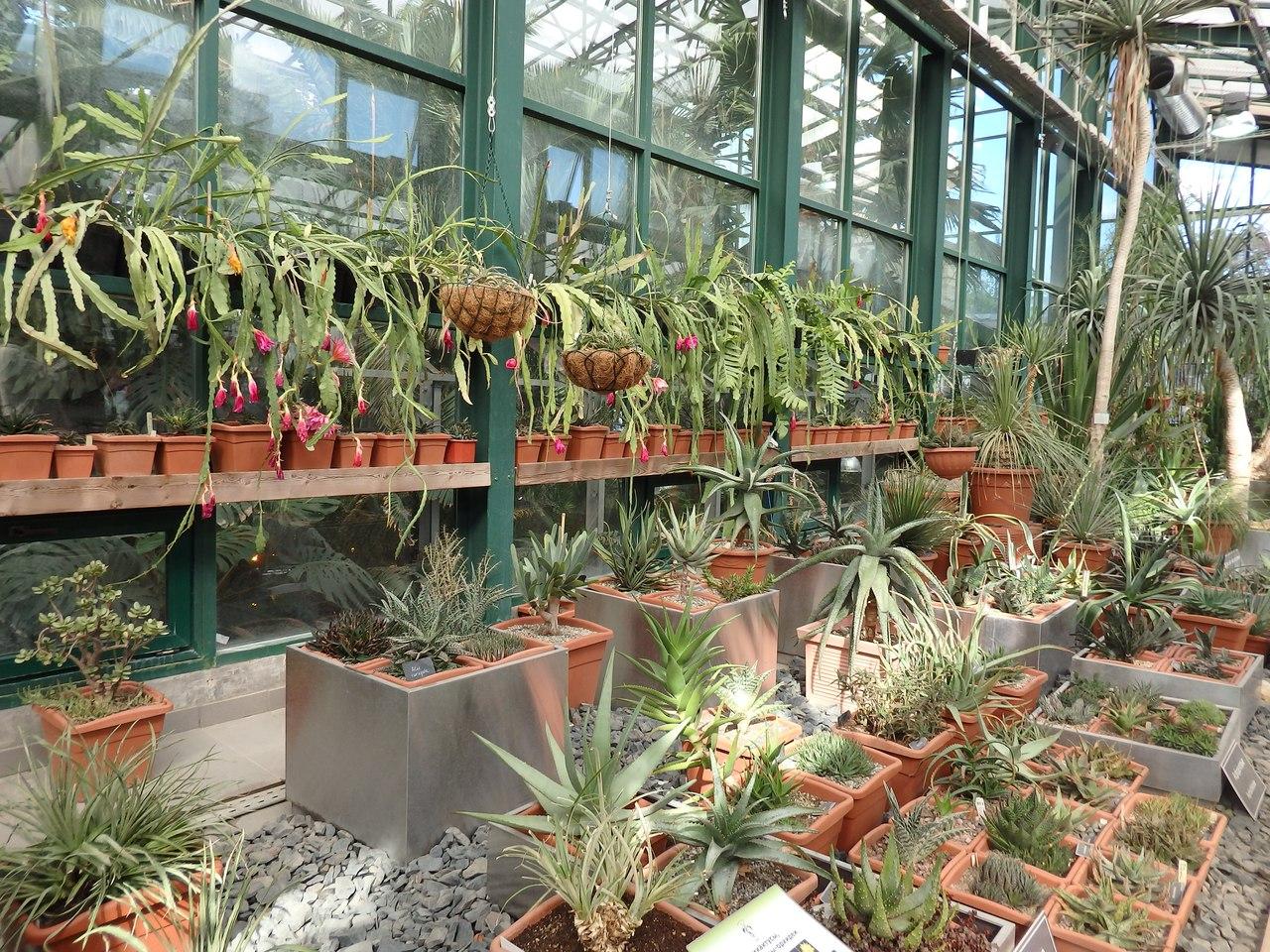 Магазин цветов у ботанического сада ассортимент