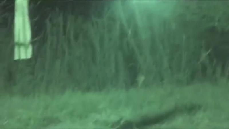 Неведомые существа снятые на видео (нарезка)
