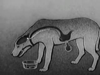 Собака Павлова - фистульный метод
