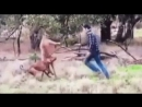 Жестокая драка кенгуру и человека