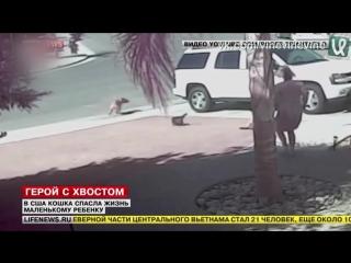 Котейка спасает ребёнка
