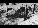 Как погиб Яков Джугашвили старший сын Сталина