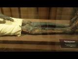 Мумия жреца Па-ди-исета (эрмитаж)