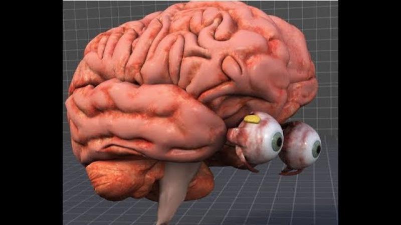 Вынос мозга 10 Зрение и мозг. Савельев С.В. 16.09.2017