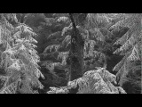 Vinterriket - Schneehain