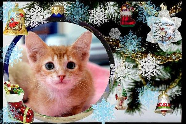 ПУШИСТИКИ ХОТЯТ ОБРЕСТИ СЕМЬЮ !!!    Бывают кошки разные -  Голодные и