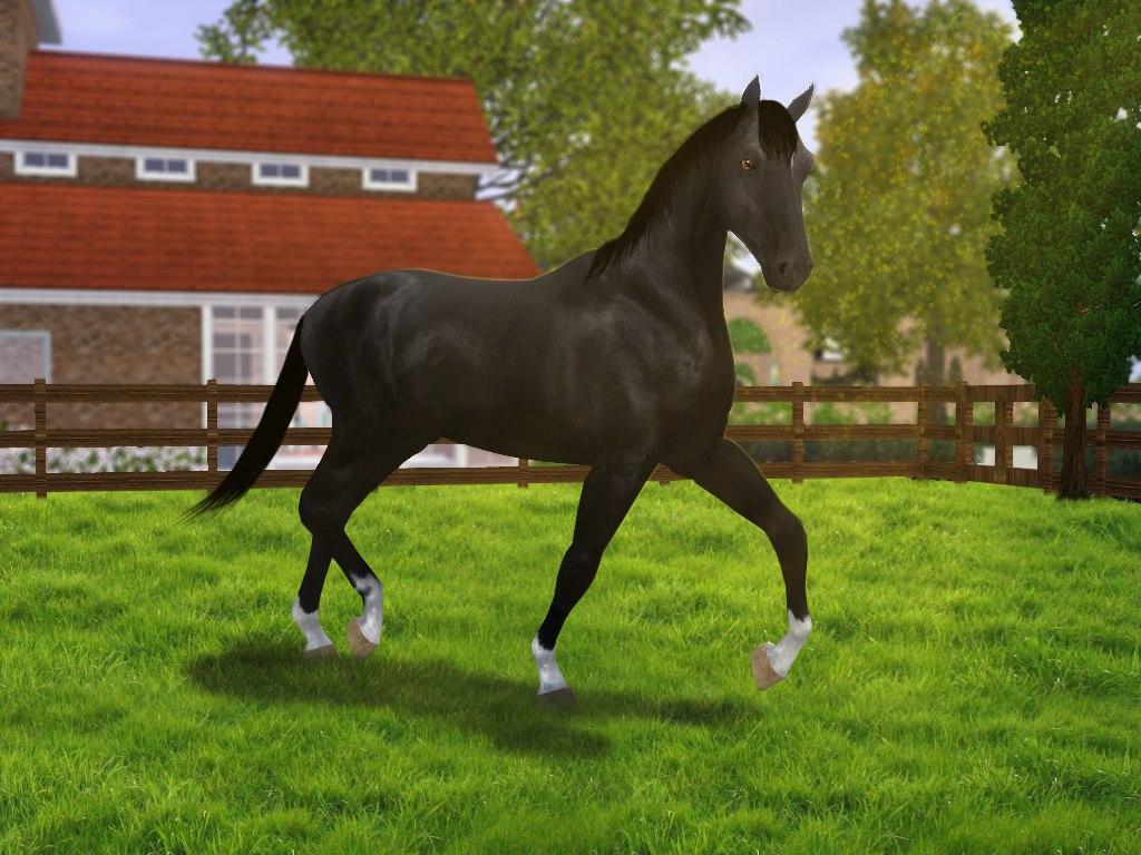 Регистрация лошадей в RHF 2 - Страница 7 YNh9CRhqvR4