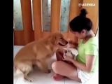 Собака лучший друг
