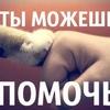 """Курская зоозащитная организация""""Право Жить"""""""