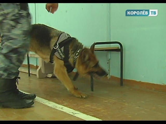 В королёвской школе обнаружили бутафорскую бомбу