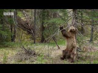 Когда узнал про Берег Медведей RTG