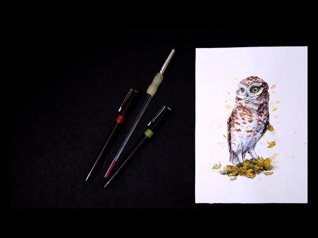 Watercolor autumn owl Athene noctua