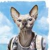 Кошки Сфинксы -великолепие моё!