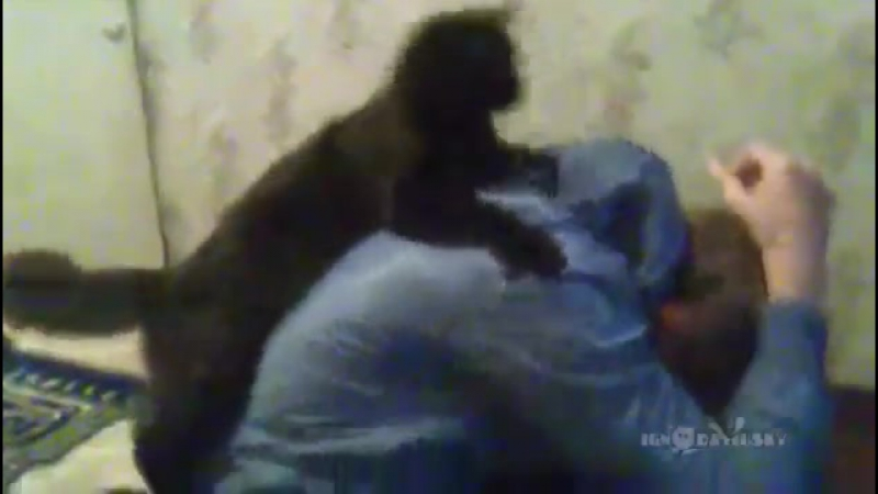 When Cats Attack _ Страшнее кошки зверя нет
