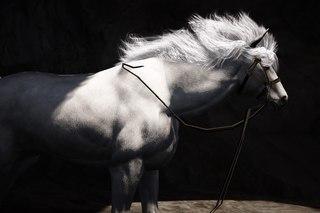 Калькулятор разведения лошадей в бдо