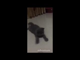 Сверхбыстрый котейка