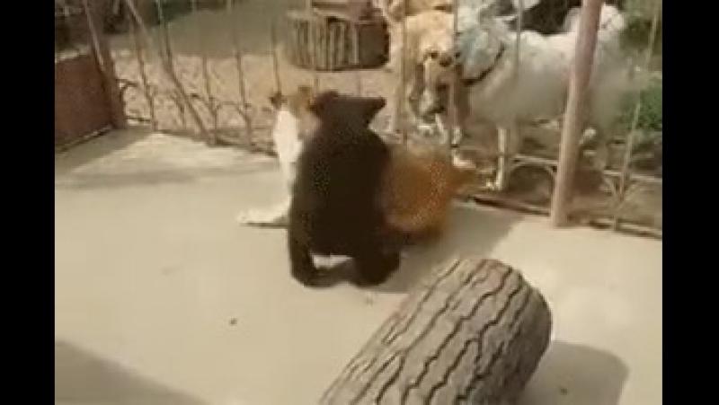 Не обижайте медвежат