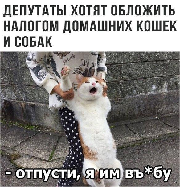 [https://pp.userapi.com/c837235/v837235740/689c7/YlpBMzsieIk.jpg]