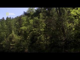 Дикая природа России | Скрытые реки лесов заповедника Сихотэ-Алинь