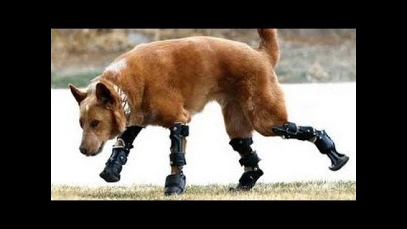 Cute Animals The Disabled Animals: My Bionic Pet Full Documentary