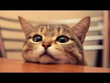 curious cat / 猫の好奇心