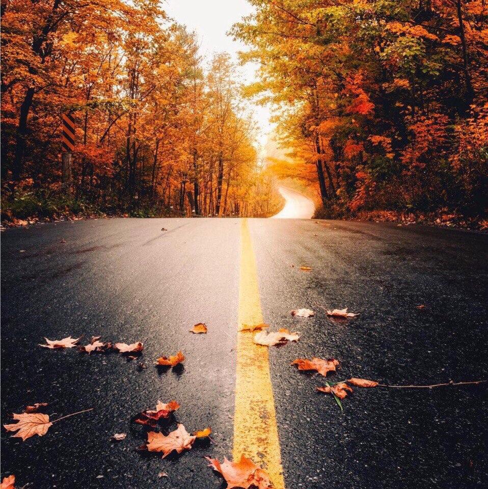 nM3EliD 6eg - Осень, ты вновь полна очарования