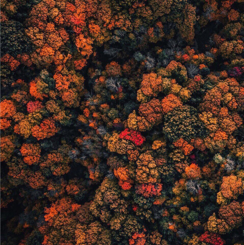 Осень, ты вновь полна очарования