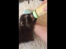 Малыш Енот кушает из бутылочки