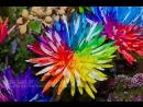 50 Самых Отборных Семян Ягод, Овощей, Фруктов и Цветов