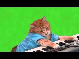 Efeitos Chroma Key - Gato Tocando teclado Meme Fundo Verde
