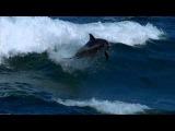 D j  Aligator--The Perfect Match (feat, Daniel  Kandi )