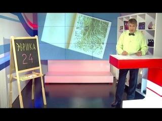 Научно-познавательный тележурнал «Эврика 24»: как сделать новогоднюю открытку с ...