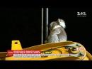 За переляканою коалою австралійським рятувальникам довелося дертися на багатометрову висоту