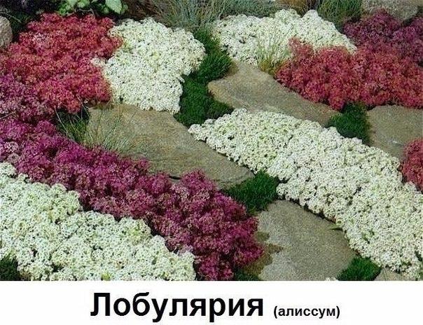 LAAXHxpbnZ8.jpg