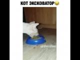 ??? #вайн #видео #смешно #vine #юмор #прикол #мило #юморист #ржака #приколы #смех #шутка #ржач #мем #LOL #fail #fails #smile #