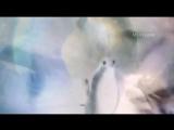 Ретро 60 е - Элвис Пресли - Голубка-No More