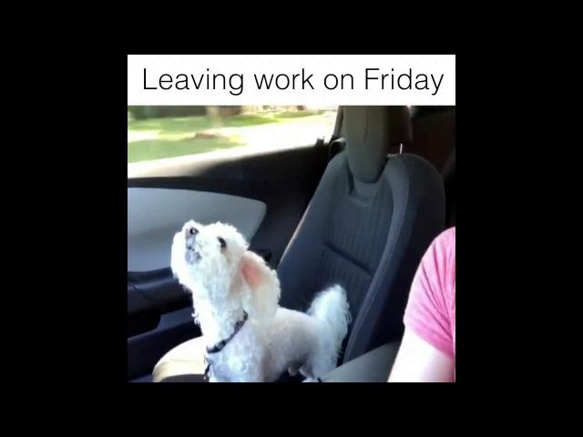 Friday! Going home after work, WOOHOO! www.Crocodilum.com