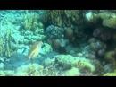 Все виды рыб Египта. Собрание опасных и не опасных рыб красного моря. Красивые рыбы Египта.