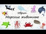 Морские животные на иврите || crazylink.ru