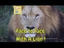 Best way to travel Safari trip in the Okavango Delta Botswana game drive with lions adventure