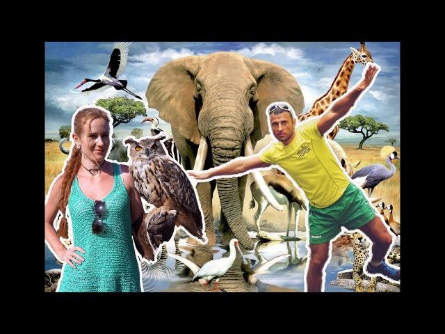 В мире животных. Парк птиц Воробьи - для детей и взрослых. Супер отдых!