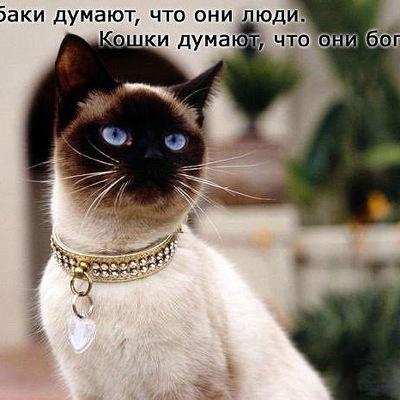 Елена Ласая
